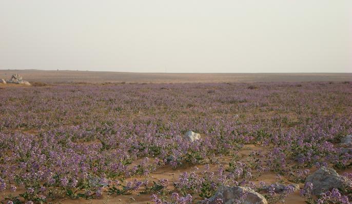 بالصور اسماء هجر ومناطق وقرى قبيلة مطير بالتفصيل مع ذكر الفخذ التابعة لها ومكانها 79 3